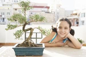 How to grow a bonsai guide