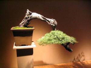 Cascade Bonsai Style - Bonsai Styles