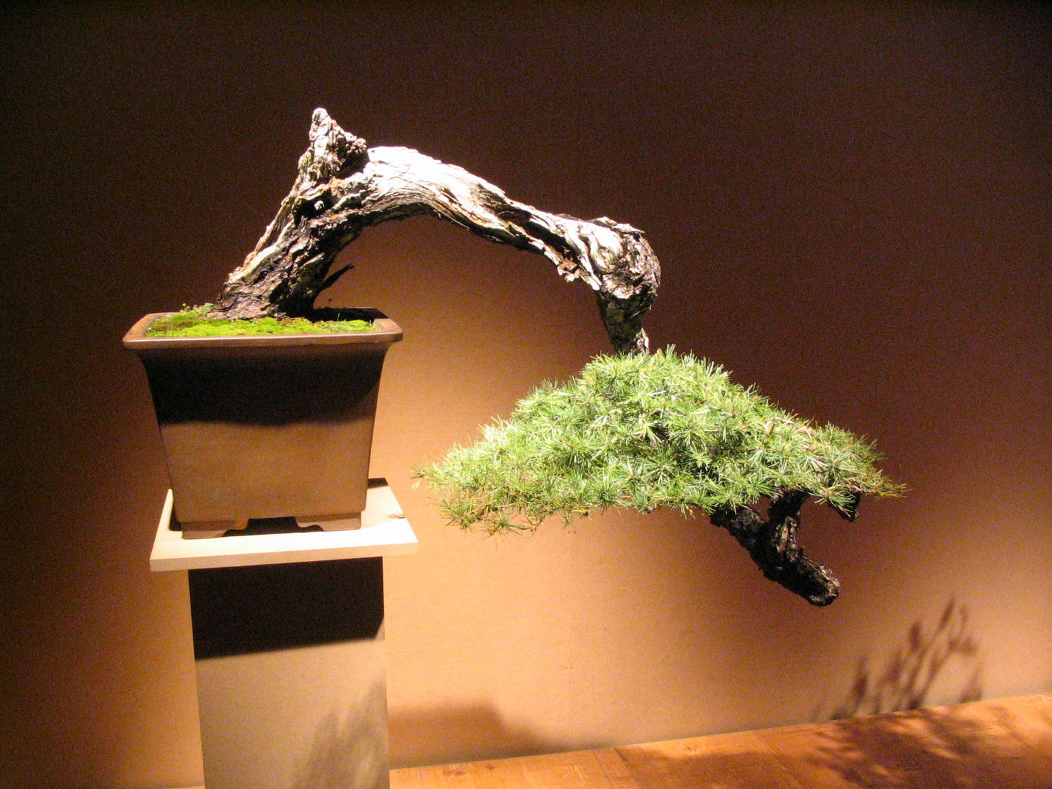 Bonsai styles overview a guide to picking a style for - Cultivo de bonsai ...