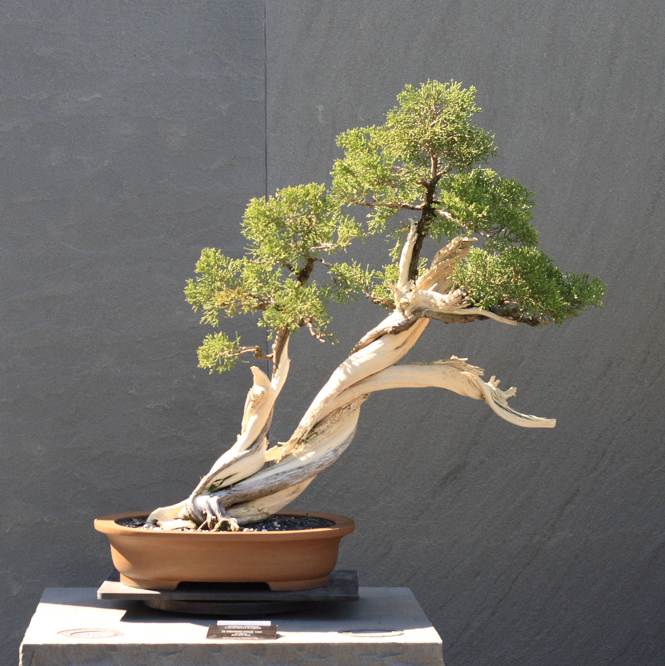 """Indoor Bonsai for Beginners: Selection – Care – Training"" Review"
