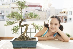 How to grow a bonsai guide