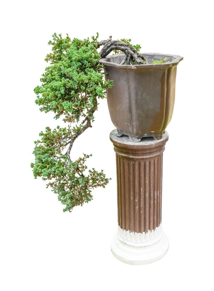 The Cascade Bonsai Style: How To Cascade Your Bonsai