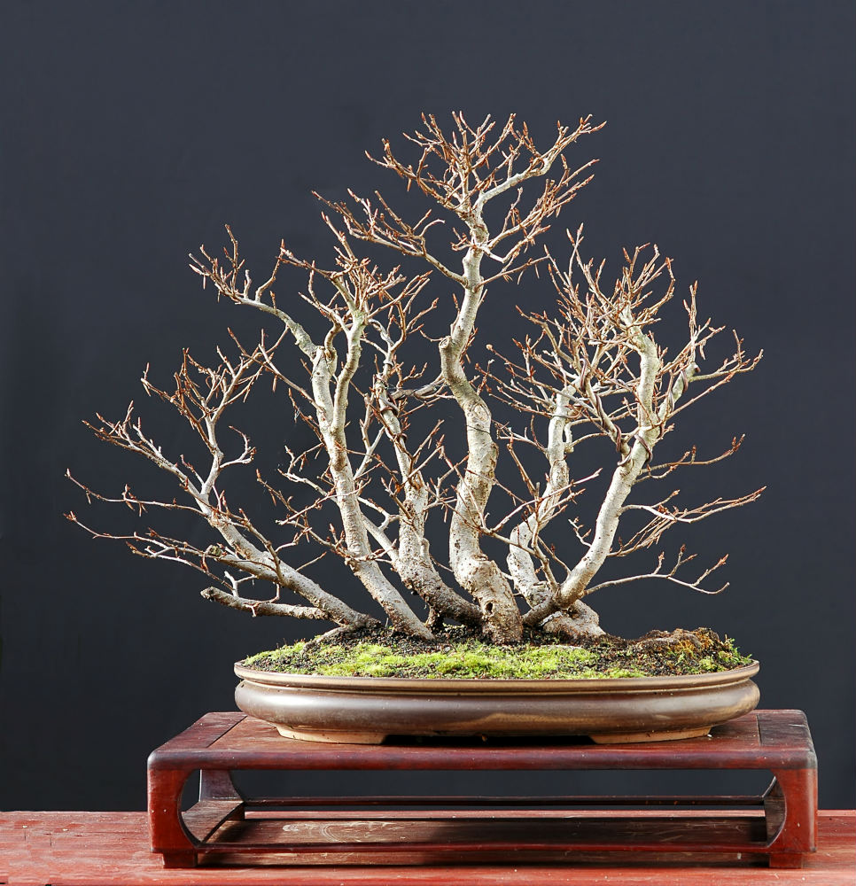 Bonsai Winter Care: How To Prepare Your Bonsai For The Cold Months