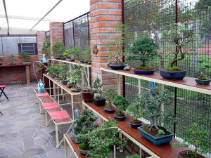 A large display of trees in bonsai pottery